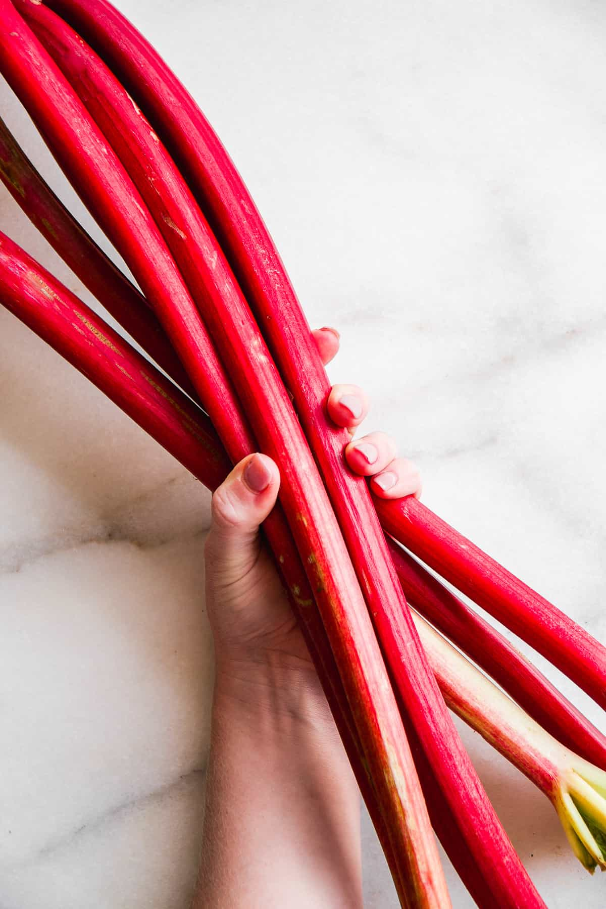 Hand holding a pile of rhubarb stalks on a white background.